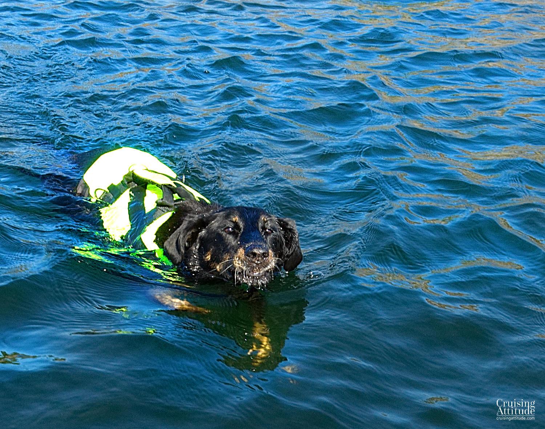 Senna swims - Fjärdlång - Cruising Attitude Sailing Blog | Discovery 55