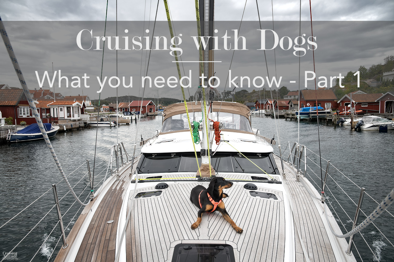 Sailing with dogs - what you need to know | Cruising Attitude Sailing Blog | Discovery 55